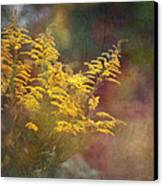 Golden Canvas Print by Brenda Bryant