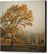 Golden Sunlit Tree With Mist, Yakima Canvas Print by Sisse Brimberg