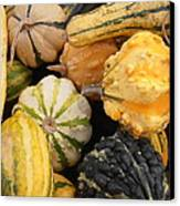 Gourds Canvas Print by Kimberly Perry
