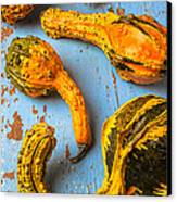 Gourds On Wooden Blue Board Canvas Print by Garry Gay