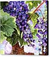 Grape Vines Canvas Print by Karen Casciani