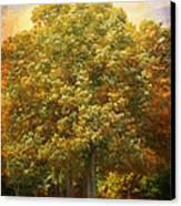 Graves Grove Canvas Print by Jai Johnson