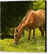 Grazing Horse Canvas Print by Charuhas Images