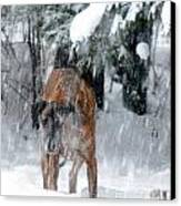 Great Dane Rufus Looking Into A Blizzard Canvas Print by Lila Fisher-Wenzel