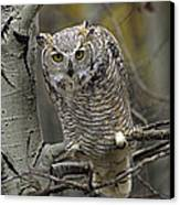 Great Horned Owl Pale Form Kootenays Canvas Print by Tim Fitzharris