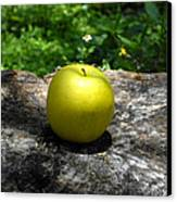 Green Apple Canvas Print by David Lee Thompson