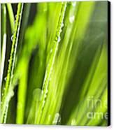 Green Dewy Grass  Canvas Print by Elena Elisseeva