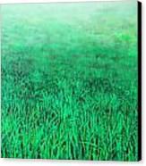 Green Grass Canvas Print by Lolita Bronzini
