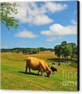 Green Pasture Canvas Print by Catherine Reusch  Daley