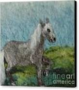 Grey Horse Canvas Print by Nicole Besack
