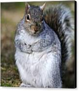 Grey Squirrel Sitting On The Ground Canvas Print by Colin Varndell