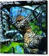 Grouse Canvas Print by Sarah Buechler