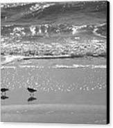 Gulls Taking A Walk Canvas Print by Cindy Lee Longhini