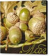 Hdr Green Acorns In A Dish Canvas Print by Jennifer Holcombe