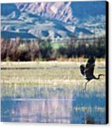 Heron In Flight Canvas Print by Harpazo_hope