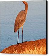 Heron On Palm Canvas Print by David Lee Thompson