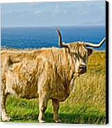 Highland Cow Canvas Print by Chris Thaxter