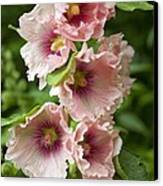 Hollyhock (alcea Rosea) Canvas Print by Dr Keith Wheeler
