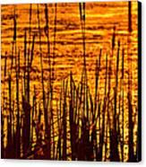 Horicon Cattail Marsh Wisconsin Canvas Print by Steve Gadomski