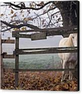 Horse At Fence Canvas Print by Jim Corwin and Photo Researchers