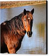 Horse By The Water Canvas Print by Jai Johnson