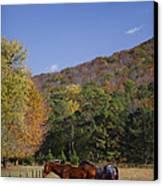 Horses And Autumn Landscape Canvas Print by Kathy Clark