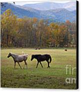 Horses Canvas Print by Lena Auxier