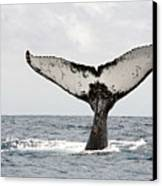 Humpback Whale Tail Canvas Print by Photography by Jessie Reeder
