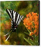 Hungry Little Butterfly Canvas Print by J Larry Walker