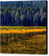 Idaho Hay Bales  Canvas Print by David Patterson