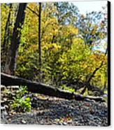 If A Tree Falls Canvas Print by Bill Cannon