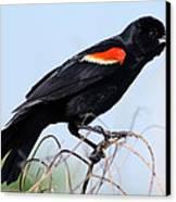 I'm Like A Bird Canvas Print by Elizabeth Chevalier