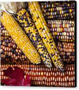 Indian Corn Canvas Print by Garry Gay