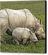 Indian Rhinoceroses Canvas Print by Tony Camacho