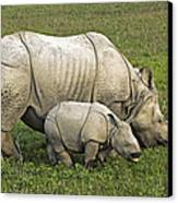 Indian Rhinoceroses Canvas Print by Tony Camacho