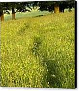 Ireland Trail Through Buttercup Meadow Canvas Print by Peter McCabe