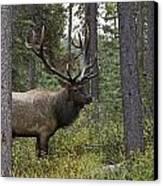 Jasper National Park, Jasper, Alberta Canvas Print by Philippe Widling