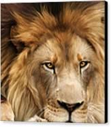 Joseph Canvas Print by Big Cat Rescue