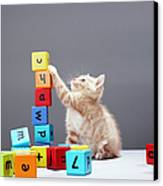Kitten Playing With Building Blocks Canvas Print by Martin Poole