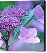 Lace Canvas Print by Becky Lodes