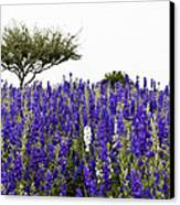 Lavender Field Canvas Print by Lisa  Spencer