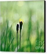 Le Centre De L Attention - Green S0101 Canvas Print by Variance Collections
