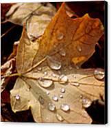 Leaf Doplets Canvas Print by LeeAnn McLaneGoetz McLaneGoetzStudioLLCcom