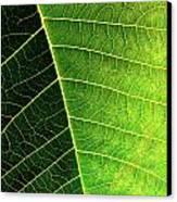 Leaf Texture Canvas Print by Carlos Caetano
