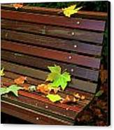 Leafs In Bench Canvas Print by Carlos Caetano