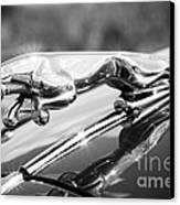 Leaping Jaguar Canvas Print by Sebastian Musial