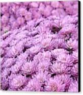 Lilac Frost Canvas Print by Elizabeth Sullivan