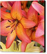 Lilies Background Canvas Print by Jane Rix