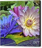 Lilies No. 30 Canvas Print by Anne Klar