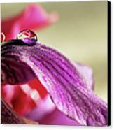 Lily's Drop Canvas Print by Gulale